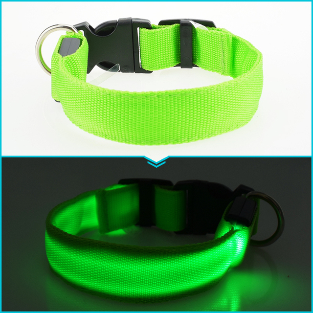 Flashing Dachshund Collar