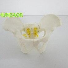 Анатомическая модель человека мини-модель женского таза анатомическая модель скелета анатомическая модель черепа Тазовая модель