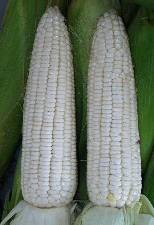 Aliexpress.com : Buy 5 Pack 50 Seed Corn Seeds White Waxy Corn Zea ...