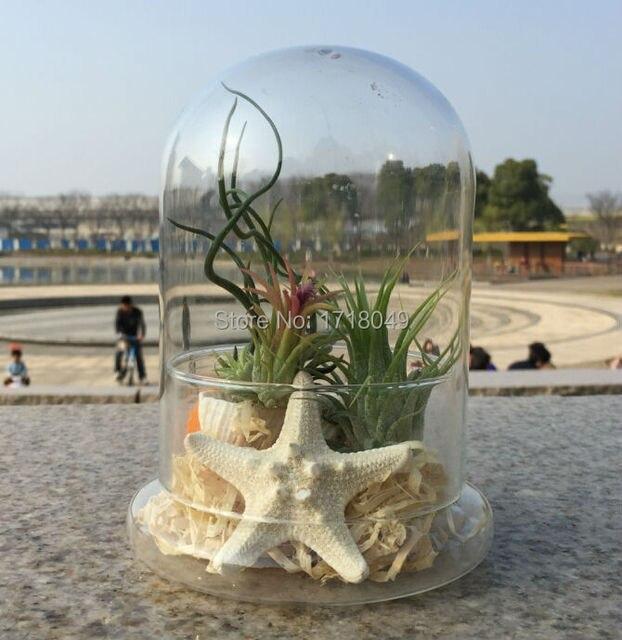 grand terrarium miniature paysage air plante d 39 int rieur. Black Bedroom Furniture Sets. Home Design Ideas