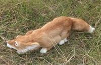 new big simulation fox toy lifelike beautiful yellow fox doll gift about 60x11cm