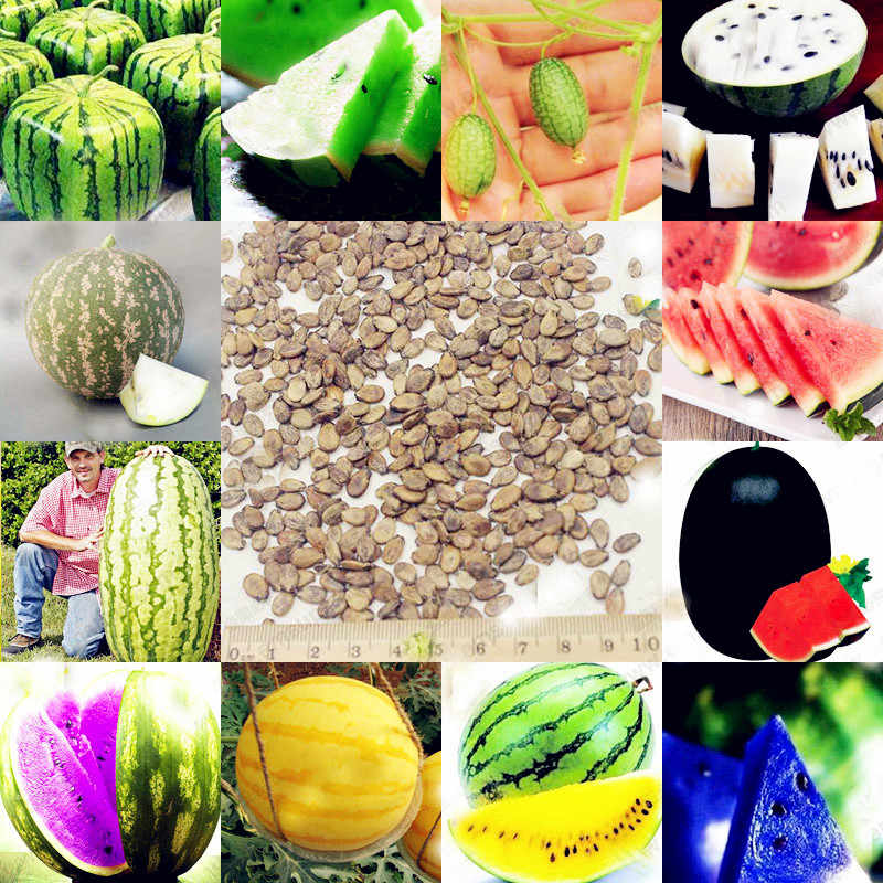 20 pcs Watermelon plants Mix Color Seedless Watermelon Sweet&juice Very Tasty Easy-growing, plant seedlings for sale