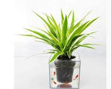 Free shipping,15*15cm,big Creative fish flowerpot automatic lazy pots transparent desktop plants potted fish tank water peach