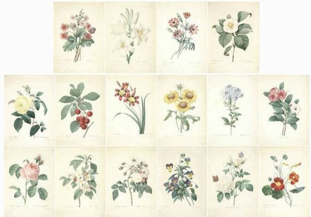 Spring Flowers Illustration Style Postcard Set 16pcs Set Vintage