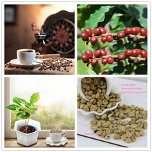 A Pack 20 Pcs Coffee Bean Seeds Balcony Bonsai Tree vegetables Plant Seed Coffee Cherry Seeds For Home Garden Two kinds seeds