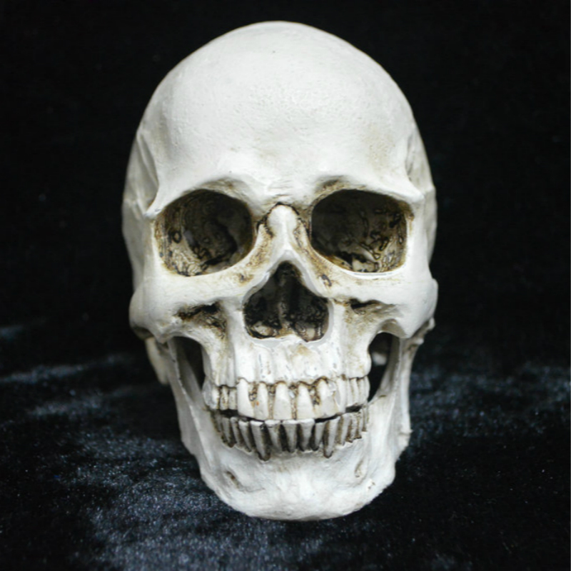 Human Head Resin Replica Medical Model Skull Chin Can Separated Craft Skull Statues Sculpture Halloween Home Decorations