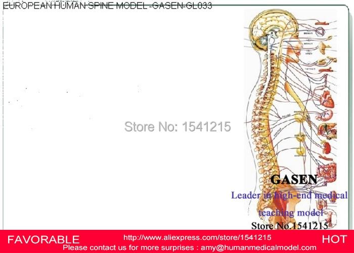 Online Shop European Version Cervical Vertebra Thoracic Lumbar