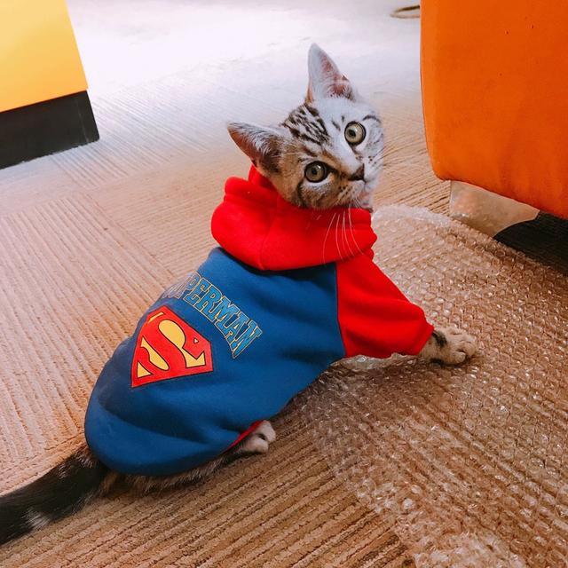 Cartoon Cat Hoodie Sweater Winter