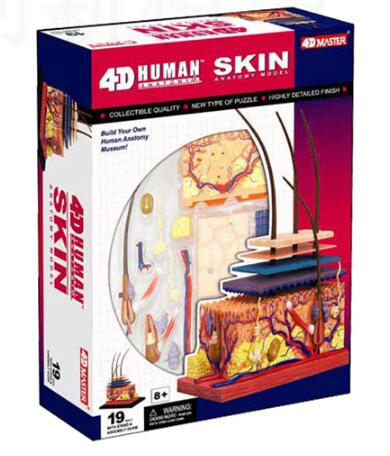 4D skin tissue model, new 3d skin tissue model. skin block model skin section model human skin anatomical model