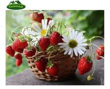 Strawberry Mewarnai Gambar Beli Murah Strawberry Mewarnai Gambar