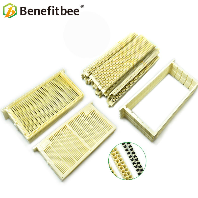 Beekeeping Queen Rearing System Bee Queen Rearing For Apis Mellifera Hot sale Height quatlity