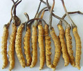Горячие продажа 500 г GMP Заводские поставка 100% Натуральный Кордицепс sinensis порошок выдержки/гриб гусеница Бесплатная доставка