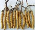Venda quente 500g Cordyceps sinensis extrato em pó GMP fonte Da Fábrica 100% Natural/lagarta fungo Frete grátis