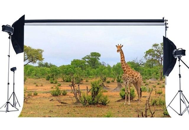 Fondo de zoológico campo Sika Deer Backdrops selva árboles naturaleza primavera fotografía fondo