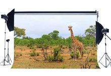 Zoo Sfondo Campagna Cervo Sika Fondali Giungla Foresta Alberi Natura Primavera Fotografia di Sfondo