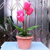 Живой тюльпан/Stage цветок фокус, этап магический реквизит, Классические игрушки, иллюзия, вечерние трюк, весело, супер эффект Magia Игрушечные л