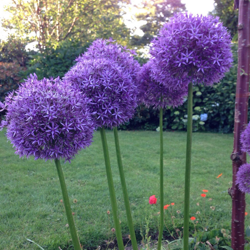 compare prices on exotic purple flowers online shopping/buy low, Natural flower