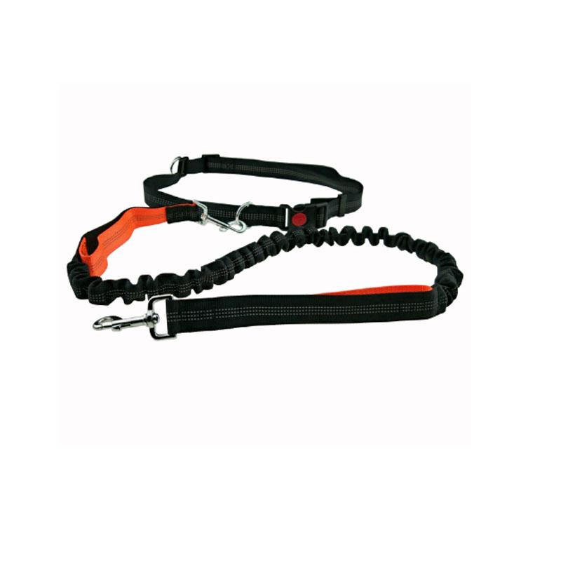 ceinture de sport pour chien