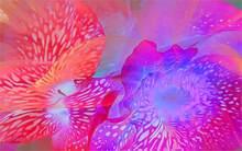 Streszczenie cvety lepestki kraski linie ZM 02 4 rozmiary tkanina jedwabna plakat na płótnie