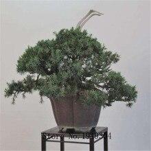 Genuine! 50 Pcs Juniper bonsai tree potted flowers office bonsai purify the air absorb harmful gases juniper garden seedsplants