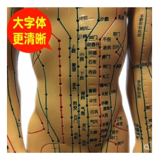 Chinese acupuncture point diagram human model 50cm men and women model clear meridian small human acupuncture point model 22cm head acupuncture point model head acupuncture four function model acupuncture model