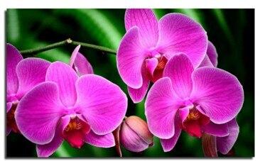 Diament Malowanie podłubać Czerwony kwiat magnolii Złoty Lilii Diament Haft kwiatowy Kryształ Okrągły Diament Robótki Mozaika Zdjęć
