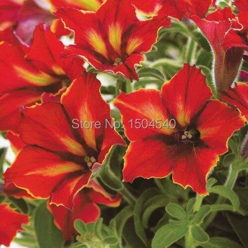 Marseed wholesale plantings 50 pcs lot rare flower plant for Plant de villa