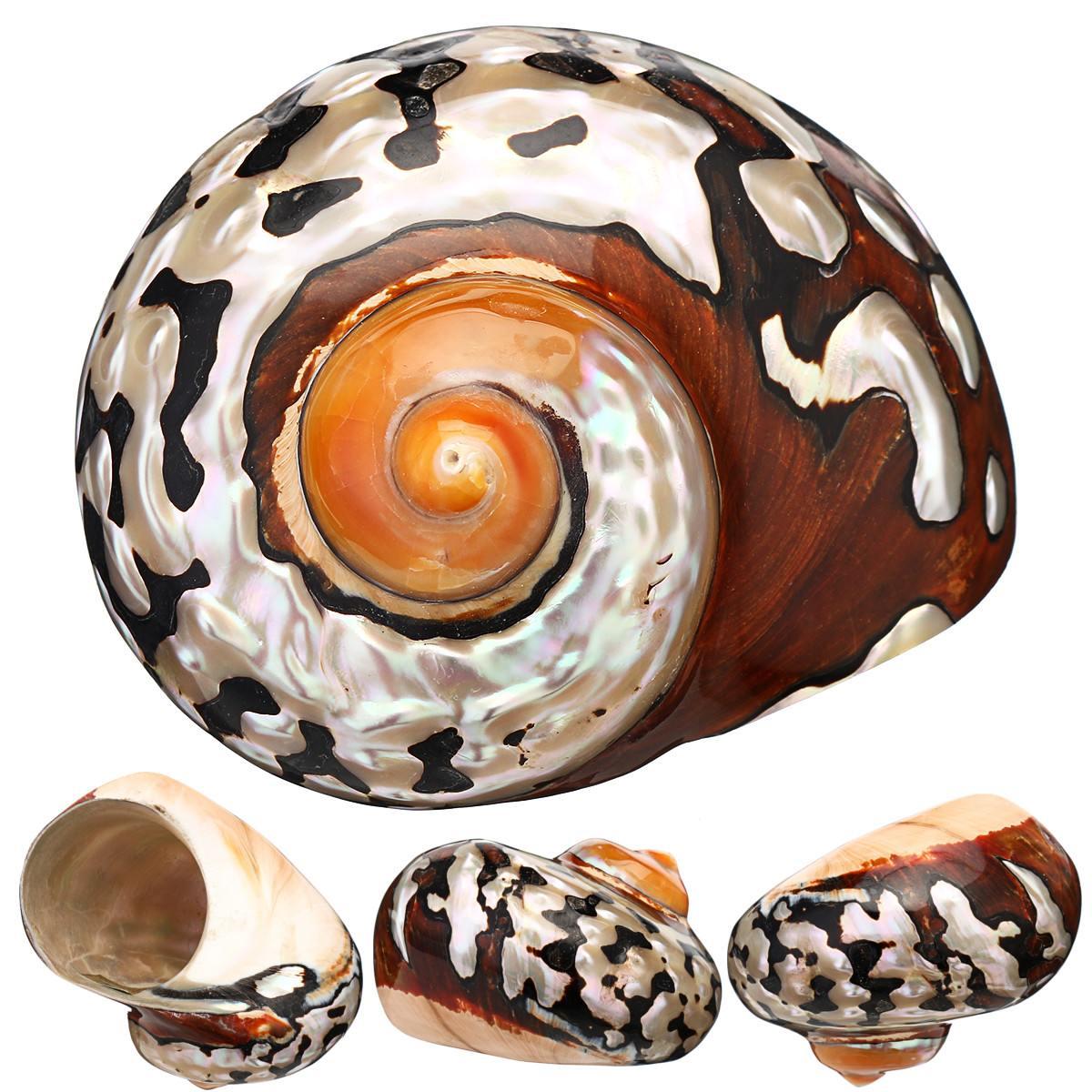 6-9,5 cm turbante de mar Natural africano concha de Coral Caracol Seashell Conch miniatura casa pecera decoración artesanal colección nueva INJORA 2 uds Metal Pedal y caja de receptor para 1:10 RC Rock Crawler coche Axial Scx10 SCX10 II 90046 Jeep Wrangler Shell cuerpo