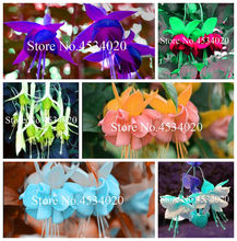Multicolor Fuchsia, Fuchsia Bonsai, Potted Flower Seedling Plants Hanging Fuchsia Flowers - 100Pcs Mini Bonsai Ornamental-plants(China)