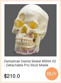 Mandíbula edentulosa dental modelo completo molde dental bloco base de silicone