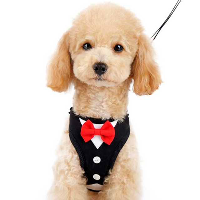 New Quality Cute Small Dog Harness Vest Soft Air Mesh Black Dog