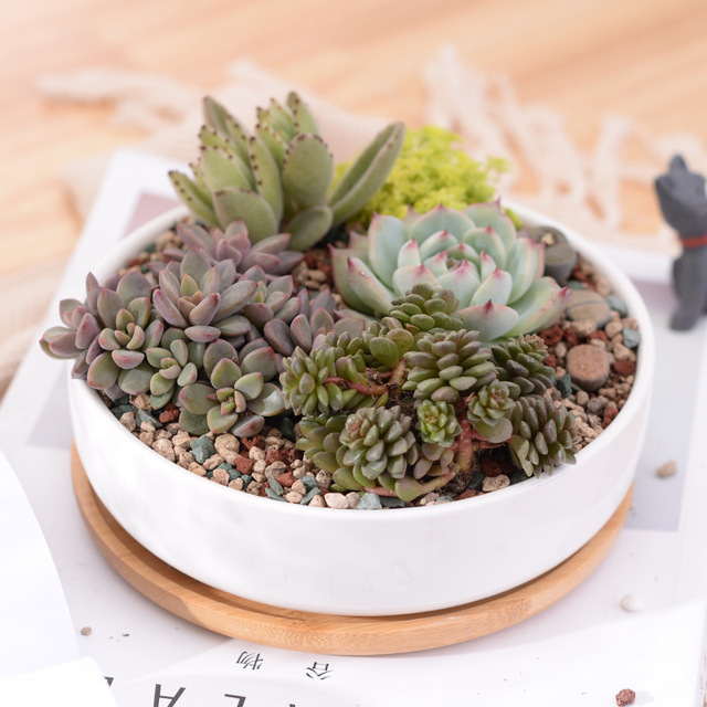 1 Set Minimalist White Ceramic Succulent Plant Pot Porcelain Shallow Rounded Desktop Z Home
