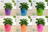 وصول جديدة ، 2 قطعة/الوحدة ، No.1.flowerpot وبائعي الجملة المياه التلقائي كسول الراتنج أوعية النباتات المائية أكثر الأواني ، هدية الإبداعية ، حديقة