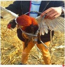 Птица/голубь/и перепела/фазан/глава удержание власть сильная ловушка диаметр бесплатно охота доставка весна