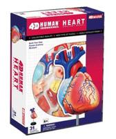 4D Human heart assembly model Medical teaching model free shopping