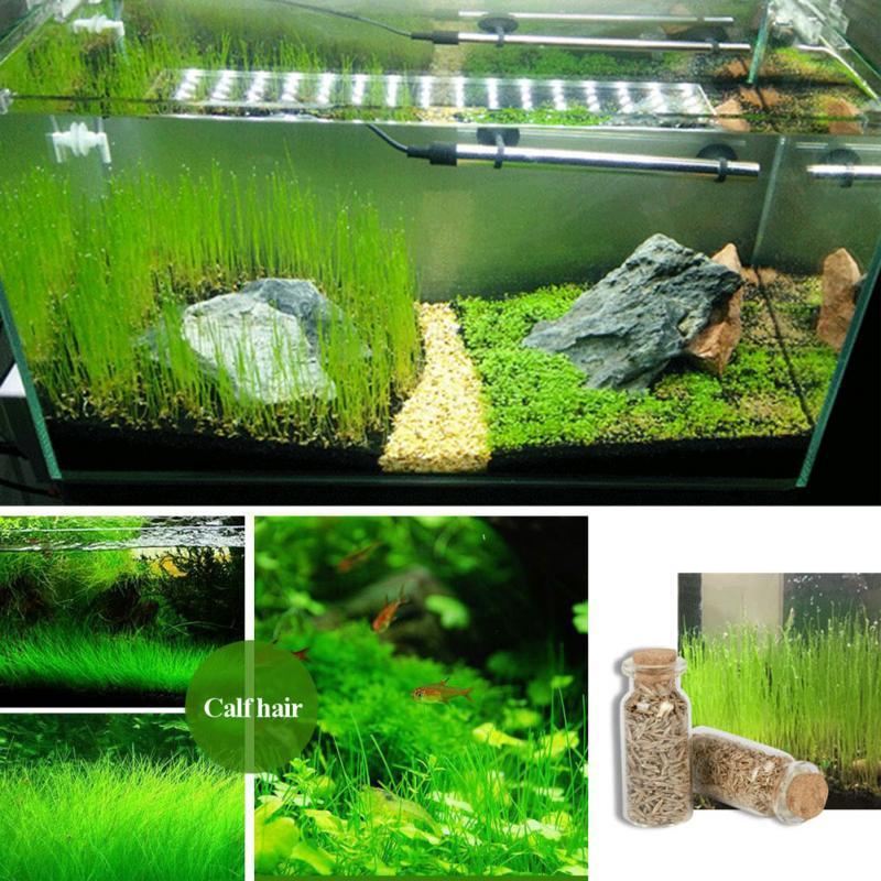 7 types Green Grass Plant Aquarium Fish Tank Plants Prospects Grass Landscaping Decoration Wholesale Seeds Water Aquatic Easy Pl