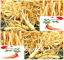 100 Seeds/Lot Hot Sale!Chinese Ginseng , Panax ginseng Seeds , Potted Bonsai Plant Flower Seeds for Home Garden(China)