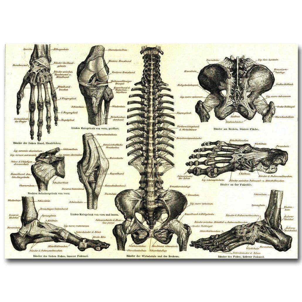 Online-Shop Menschlichen Anatomie Knochen Skelettsystems Art Silk ...