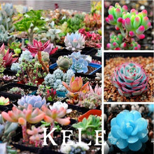 Loss Promotion!!! 300seeds/pack Mix Succulent seeds lotus Lithops Pseudotruncatella Bonsai plants Seeds Free Shipping