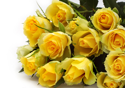 200 seeds china rare yellow rose flower to your lover mg4 200 in 200 seeds china rare yellow rose flower to your lover mg4 200 mightylinksfo