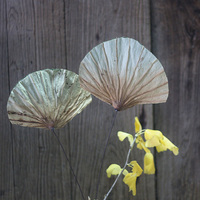 2 Pieces Fan Shape Lotus Leaves Natural Dried Leaves Handmade Plant Combination Natural Home Decoration Material