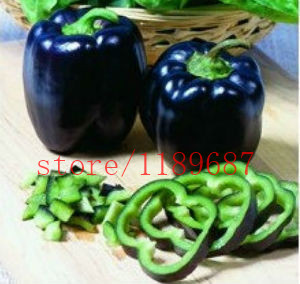 pepper seeds 200 chili black and purple sweet pepper seeds NO-GMO vegetable seeds for home garden planting ...