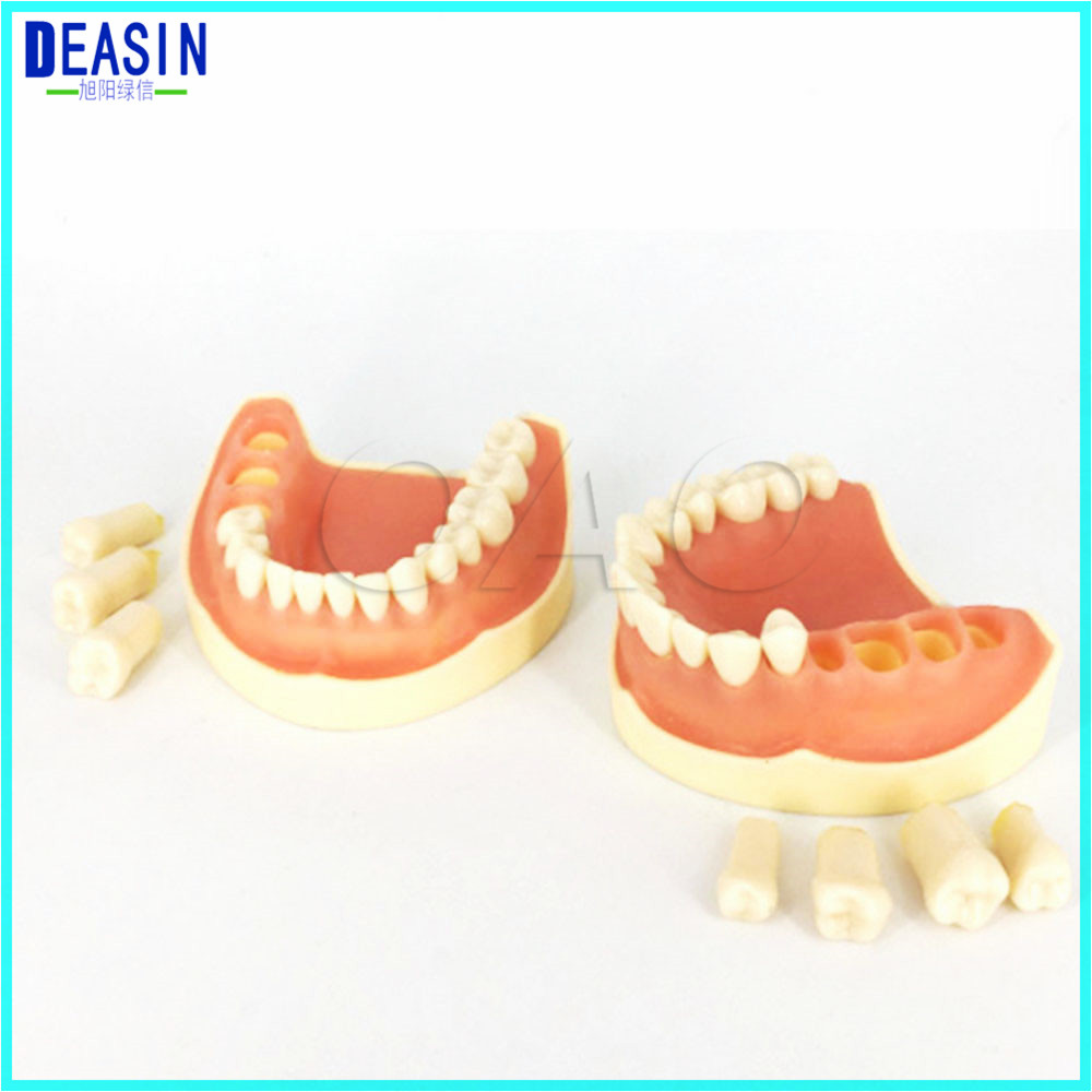 2018 Dental All Teeth Removable Standard Teeth Tooth Model 32 PCS Teeth Student Learning Model