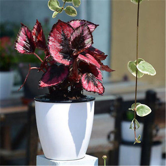 large size automatic water absorbing flower pots bonsai creative