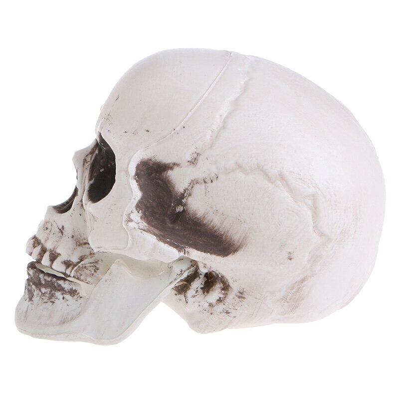 En plastique Mini-Humain Crâne accessoire pour décor Squelette Tête Halloween Café Bars Ornement