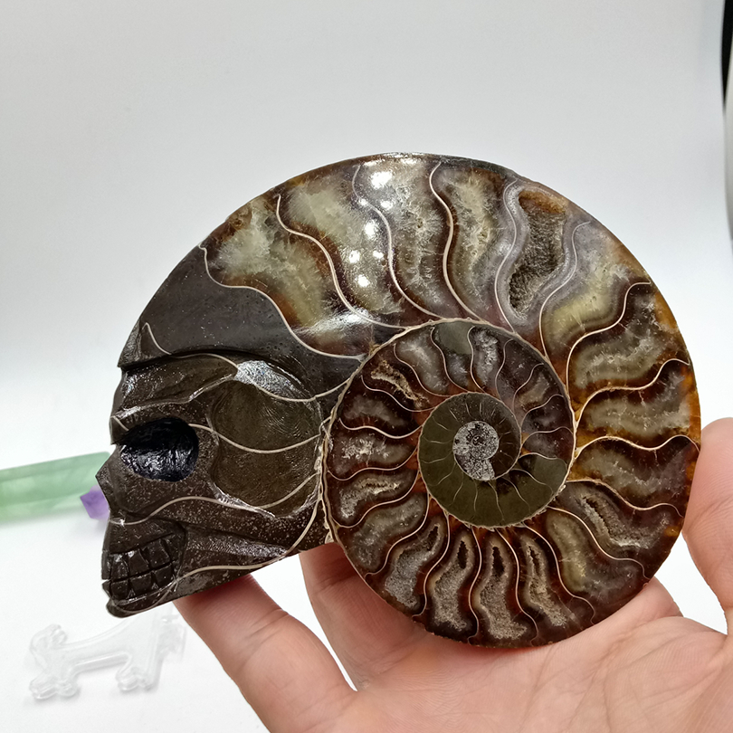 308 grams of high-quality nautilus conch shell carving skull healing mineral specimen Halloween decorations308 grams of high-quality nautilus conch shell carving skull healing mineral specimen Halloween decorations