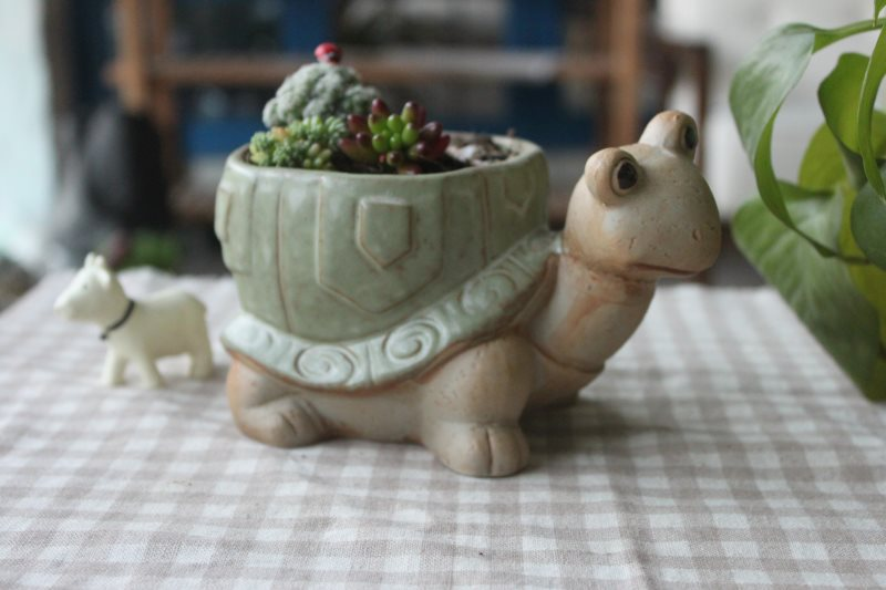 ceramic indoor plant pot, turtle shape pottery-in Flower