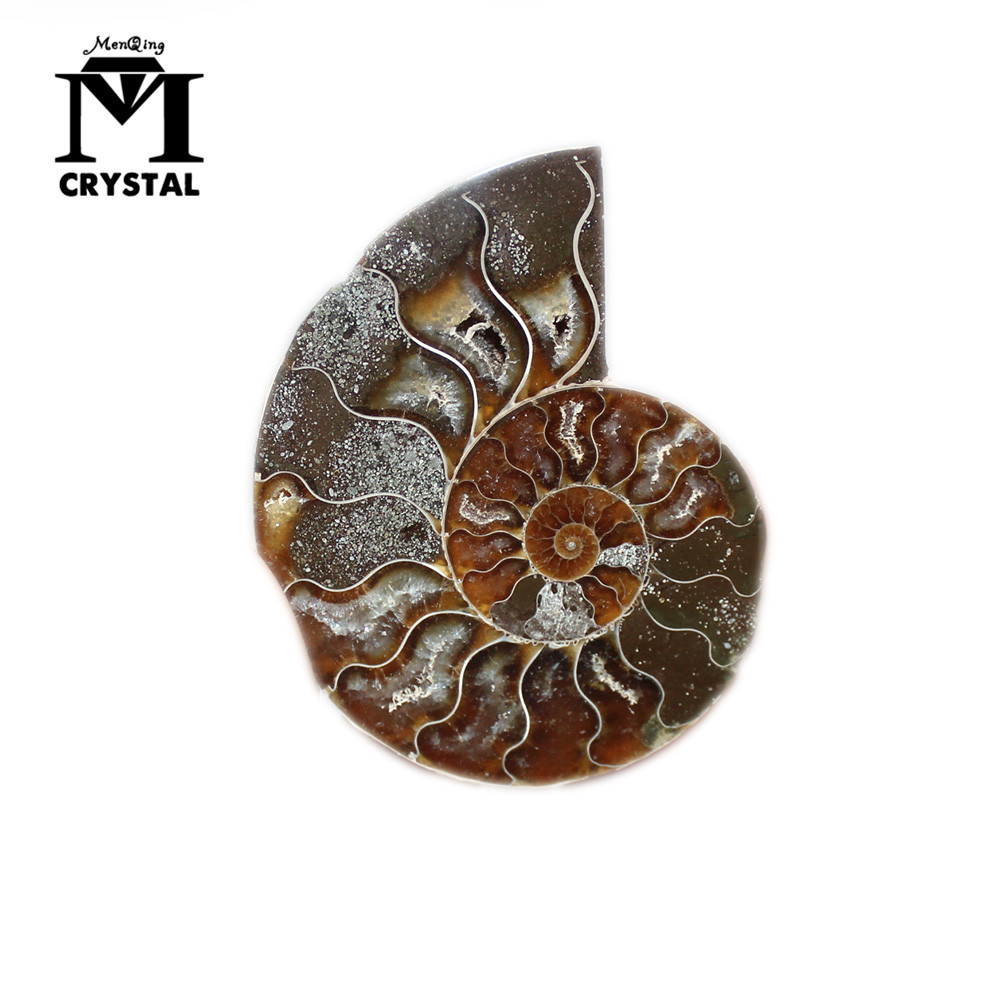 A Pair Of Natural Ammonite Fossil Specimen Shell Conch Nautilus Pompiplius Ocean Jasper Fish Tank Stones Healing About 30mm