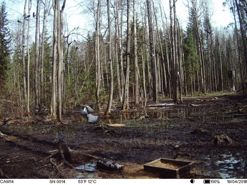 Newest GPS Hunting Camera Digital Video Camera Photo-Traps 4G FDD-LTE Hunting Trail Camera Trap Wild Camera Hunter Foto Chasse wildcamera (1)