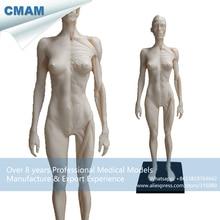CMAM-PRC44 White PU Material 1:6 Female 30cm Sculpture Medical Artist Model